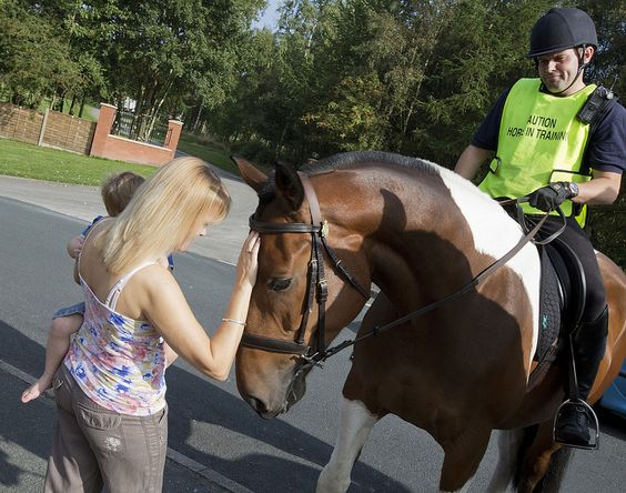 Trainee police horse Jingle continues to learn the skills he will need to work full-time on the streets of Greater Manchester. His trainer, Paul Hodgkinson, is currently introducing him to a range of experiences that will help him cope with anything he might face in future role. On this occasion he was out and about on rural roads and also got the chance to meet a lots of members of the public…who were only too happy to say hello! www.gmp.police.uk