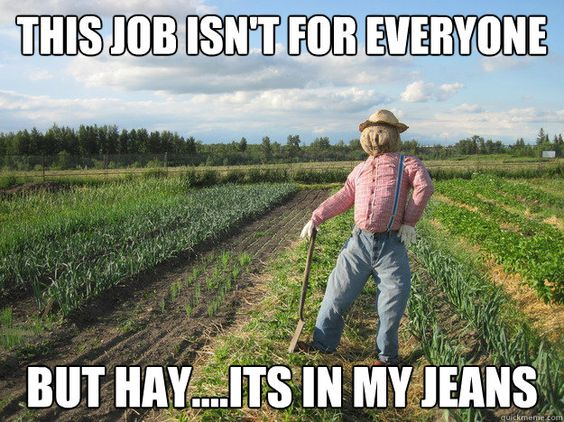 this job isnt for everyone but hay,its in my jeans - Scarecrow