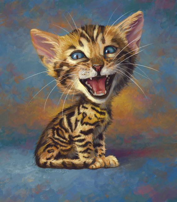 Bengal Kitten Bengal Kitten Bengal Cat Bengal Cat Kitten