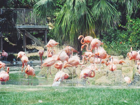 Busch Gardens, Busch Gardens Tampa, Busch Gardens Florida, Best Florida Attractions, Busch Gardens Theme Park, Visit Florida Busch Gardens, ...