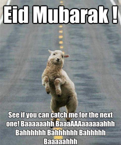 Bakra Eid Mubarak Funny : bakra, mubarak, funny, Bakra, Jokes, Jokes,, Mubarak,