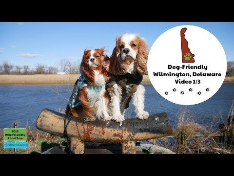 Dog Friendly Wilmington Delaware Travel Guide Dexter And Levi S