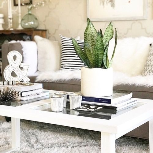 Snake Plant Vignette Spring Homedecor Interiordesign Homedecorideas Homedecoration Interiordesig Living Room Trends Coffee Table Decorating Coffee Tables