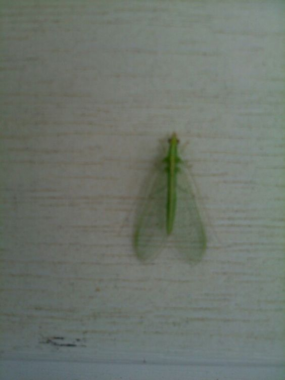 Close-up of greem moth-like thing outside Granny's