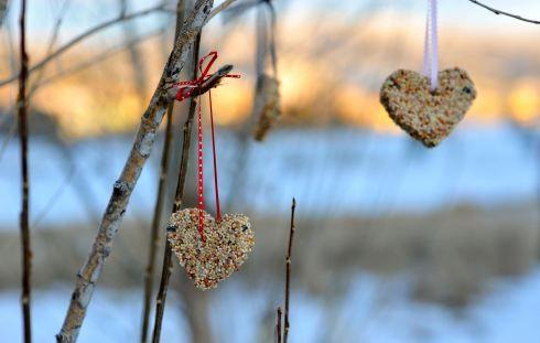 Heart Bird Feeders