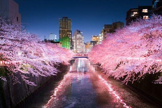 null @NrNrNr7  4月8日 目黒川の夜桜 (2016.4.6) #目黒川 #桜  Kouji Tomihisaさん