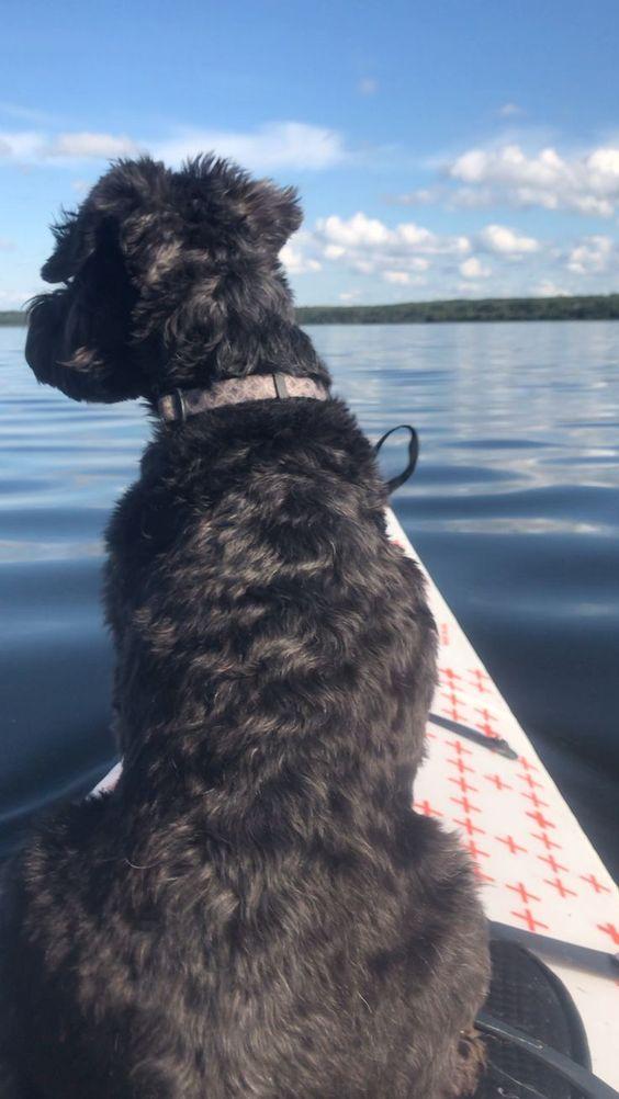 Nala Enjoys Kayaking And Looking Out For Water Birds Buck Lake Alberta In 2020 Kayaking Dog Travel Dogs