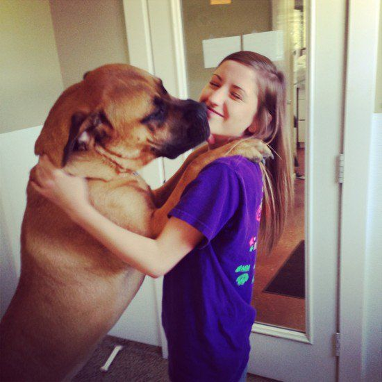 Os maiores cães do mundo
