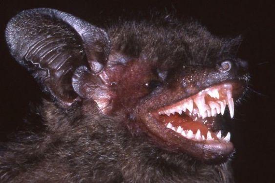 Scary bat