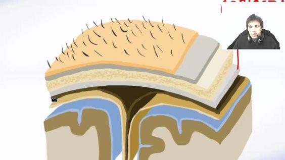 All Brain Meninges (Membranes) - Brain Anatomy