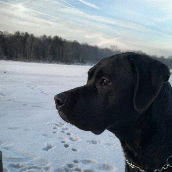 My photo adventure pal .. Henry, on frozen Pymatuning Lake, Linesville PA