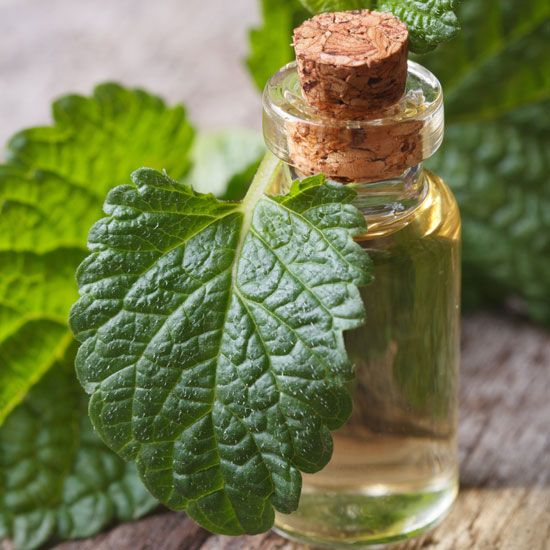 Immune-Boosting Lemon Balm Tincture - Health and Wellness - Mother Earth Living