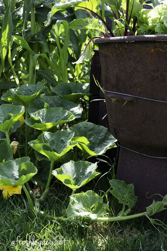 Summer in the garden. Planting, harvesting and jobs this month.