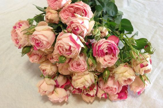 Speckled Opal Gem Garden Spray Rose