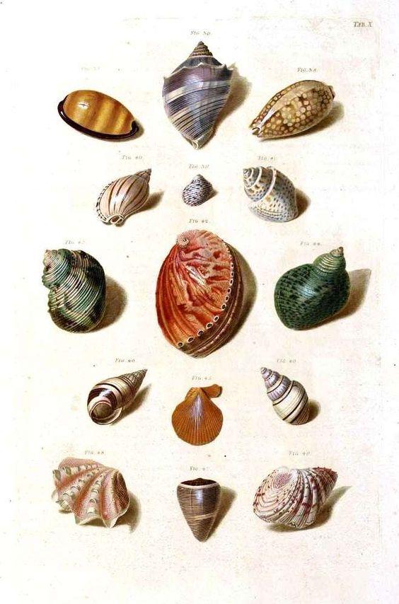Vintage Printables - Caracolas