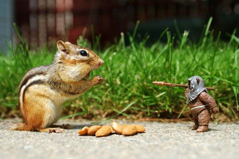 chipmunk vs. ewok:)