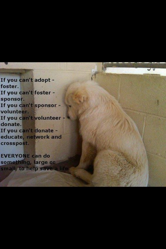 AMEN! I've seen way to many dogs in the pound look just like this! Please ADOPT and do not buy a dog