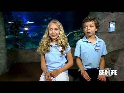 SEA LIFE Arizona Presents: World Oceans Day at SEA LIFE Arizona
