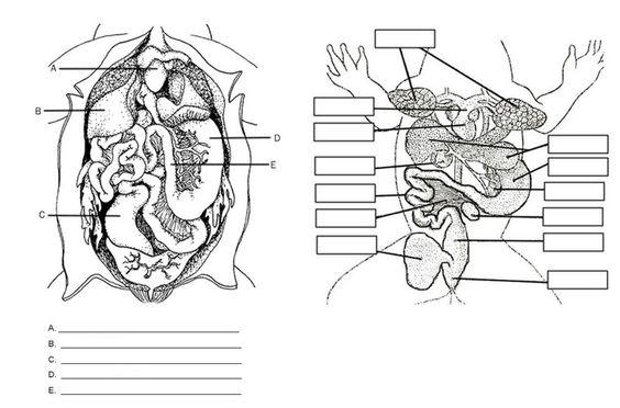 frog anatomy labeling worksheet hs science biology pinterest frogs worksheets and anatomy. Black Bedroom Furniture Sets. Home Design Ideas