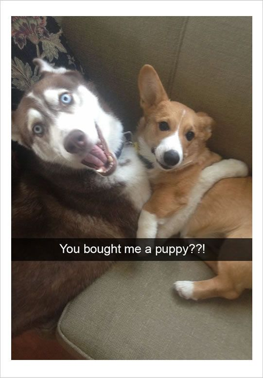 12 Funny Dog Memes 6 When The Lego Dog Arrives Funny Animals