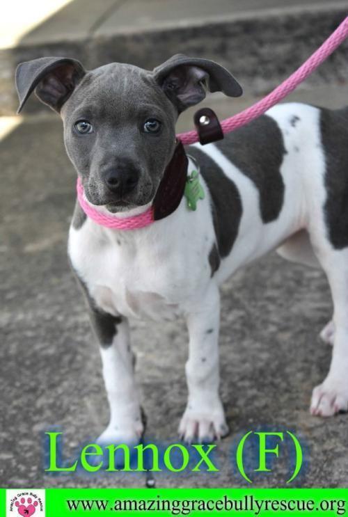 Adopt Lennox On With Images Dog Pounds Adoption Dog Adoption