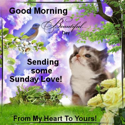 Image result for special sunday wishes friend gifs with animals