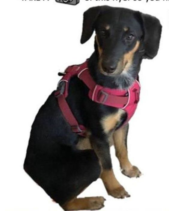 Lost Dog Excelsior Mix Breed Female Date Lost 03 22 2020 Dog S Name Daisy Breed Of Dog Mix Gender Female Closest Inte In 2020 Losing A Dog Dog Ages Dog Names