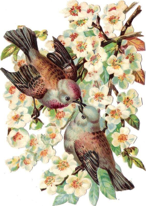 Oblaten Glanzbild scrap die cut Vogel  16,5cm Vögel bird Ast Zweig Baum Blüten: