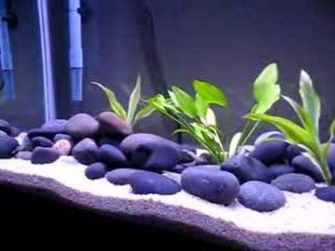 Freshwater Aquarium Design Ideas image of fish aquarium decoration ideas Really Nice Simple Design 55 Gallon Goldfish Aquarium Fresh Water