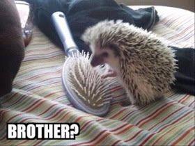 Amazing Creatures: 30 Funny animal captions - part 8 (30 pics):