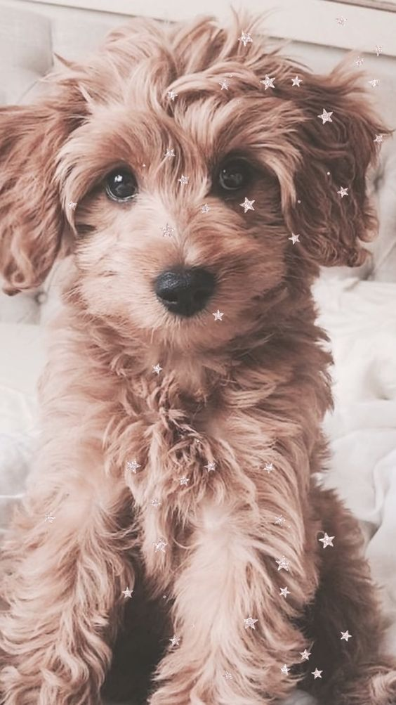 The Best Cute Iphone Wallpaper Backgrounds For Teens And For Girls Download For Free Image C Elizabeth A In 2020 Cute Dog Wallpaper Cute Puppies Cute Baby Animals