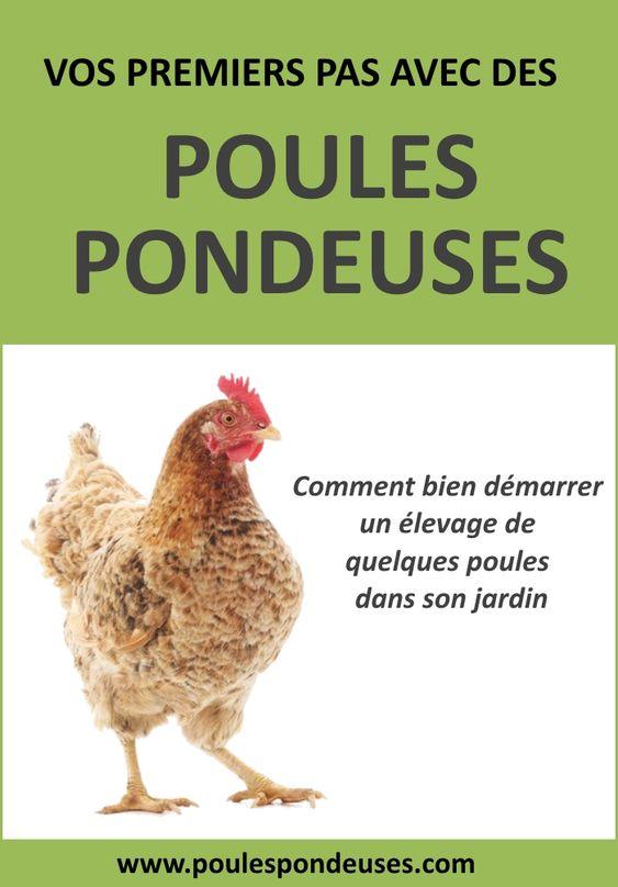 alimentation pour vos poules comment bien nourriture vos poules pour obtenir de beaux oeufs. Black Bedroom Furniture Sets. Home Design Ideas