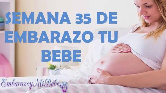 EVOLUCION DEL EMBARAZO Semana 35 tu bebe