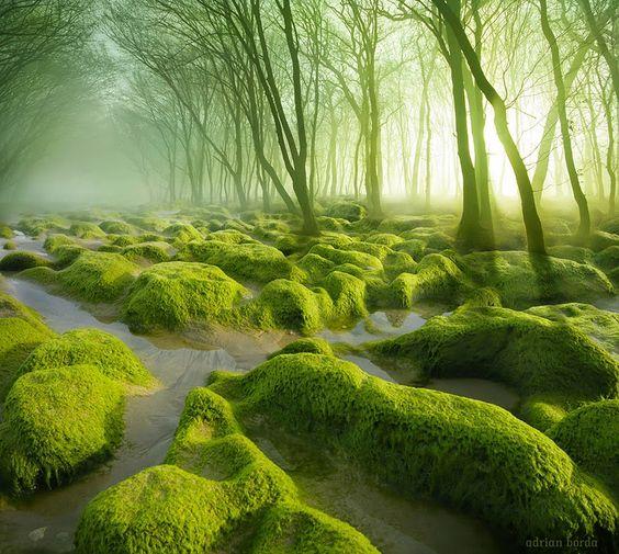 Lembra quando Grandier e a fadinha Eileen passavam por um pântano estranho em A Canção dos Quatro Ventos?  Pântano de musgos na Romênia.