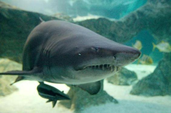 Niño atacado por tiburón en playas de Florida - http://notimundo.com.mx/mundo/nino-atacado-por-tiburon-en-playas-de-florida/9871