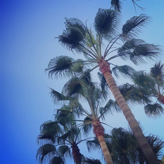 #goodmorning good morning  how do you do? #santabarbara #mysantabarbara #santabarbaraliving #santabarbaralifestyle #california #palmtrees