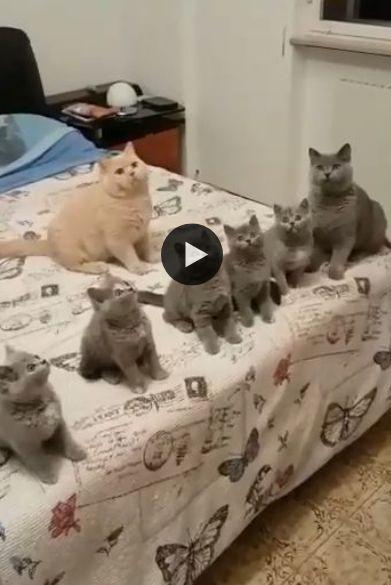 A Turma do Miau se Diverte com brinquedo
