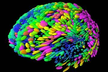 Personal Brain Management: Ready for Prime Time? | The Creativity Post: Brain Images, Brain Management, Template Brain, Brain Ucla, Arthur Toga, The Brain, Toga Ucla, Personal Brain, Creativity Post