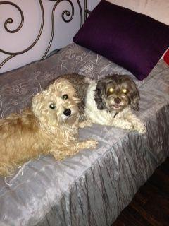 Fred and Annie | Pawshake North York