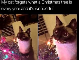 Wholesome Christmashttps I Redd It N8w8emxsw3841 Jpg Cute Animals Funny Animal Pictures Cute Funny Animals