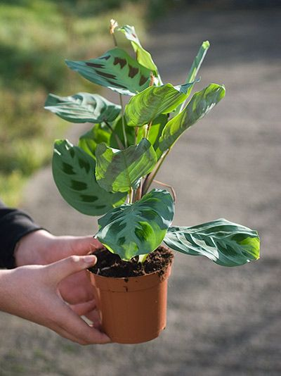 Pinterest the world s catalog of ideas for Buy air purifying plants