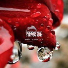 Quotes Islam Verset Surat Quran Allah