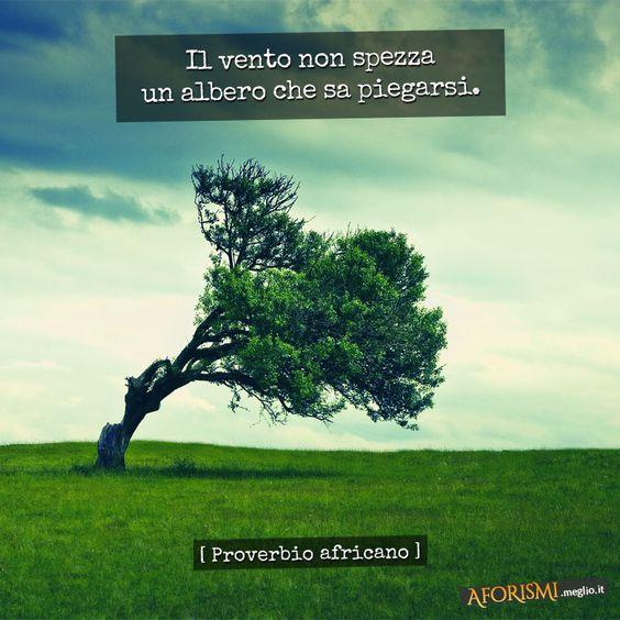 Il vento non spezza un albero che sa piegarsi. (Proverbio africano)