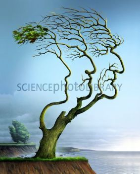 Family tree, conceptual artwork - Stock Image C006/8394 - Science Photo Library: