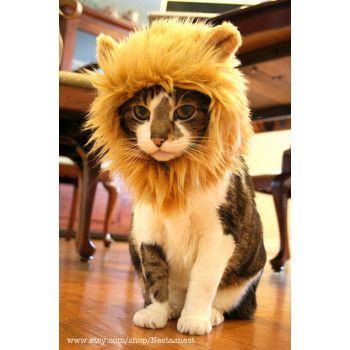 """tête de lion pour chat, """"roar!"""""""