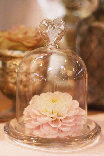 Mini Glass Dome Bell Jar