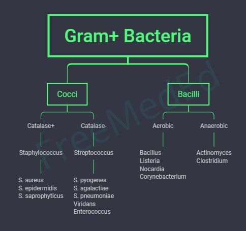 Gram Bacteria Medical Laboratory Science Student Medical Laboratory Scientist Medical School Studying