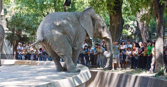 Cierren el Zoológico de Buenos Aires! FIRMA Y COMPARTE ESTA PETICIÓN AHORA!