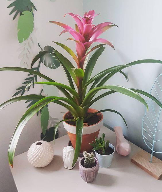 Bromélia: cuidados, tipos e ideias para cultivar essa planta exuberante