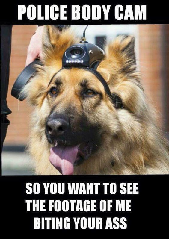 Police under investigation over 'dog's' witness statement